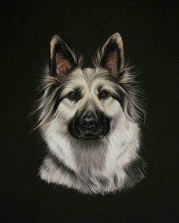 Indie-German-Shepherd-823x1024